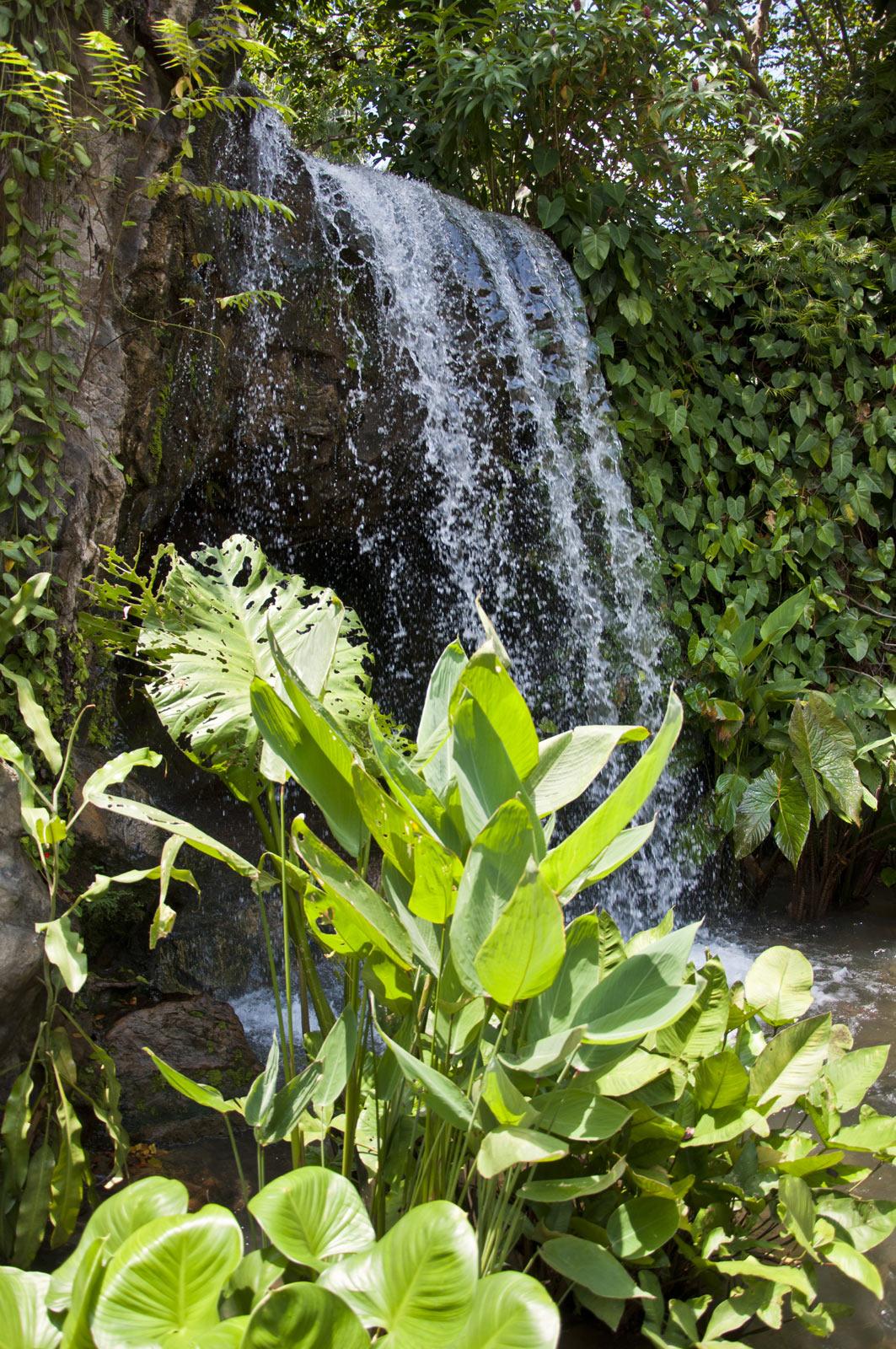 Водопад в Имбирном саду