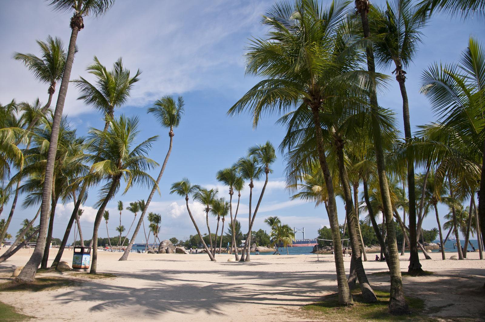 Пальмы на пляже острова Сентоса