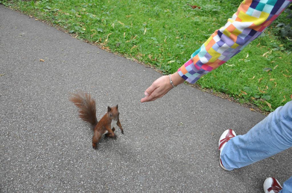 Храбрые белки в варшавском парке