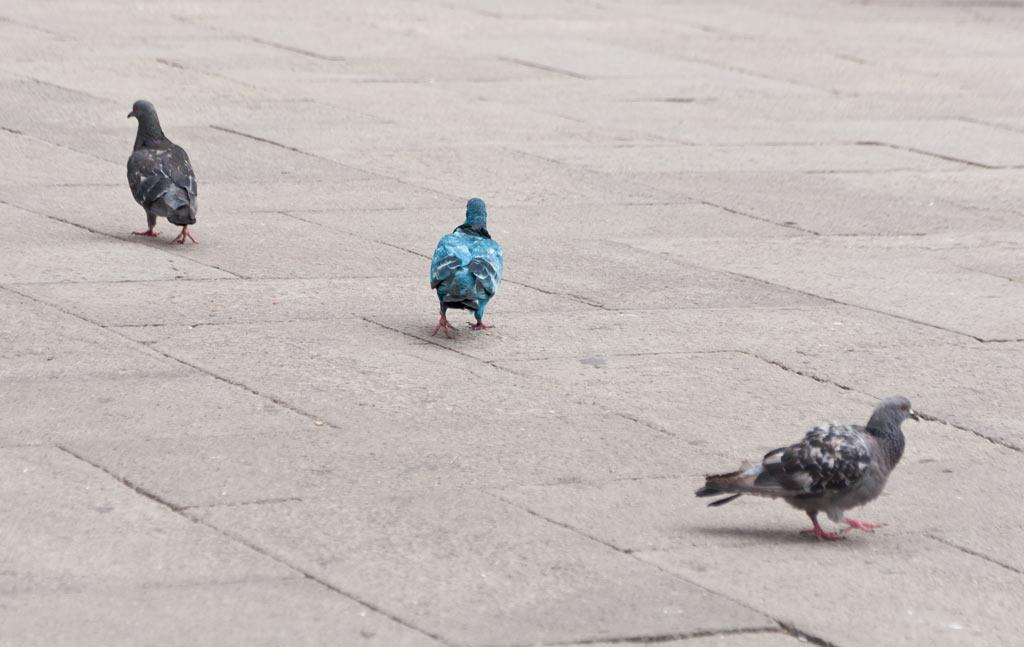 Разноцветные голуби на площади Сан-Марко