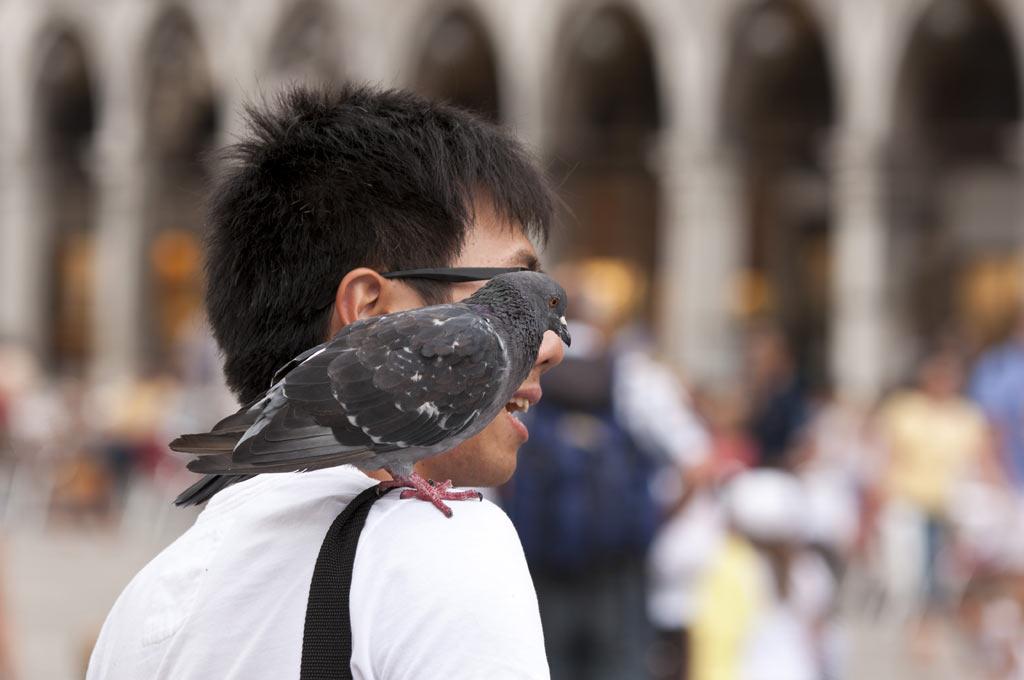 Мерзкий голубь на плече туриста на площади Сан-Марко