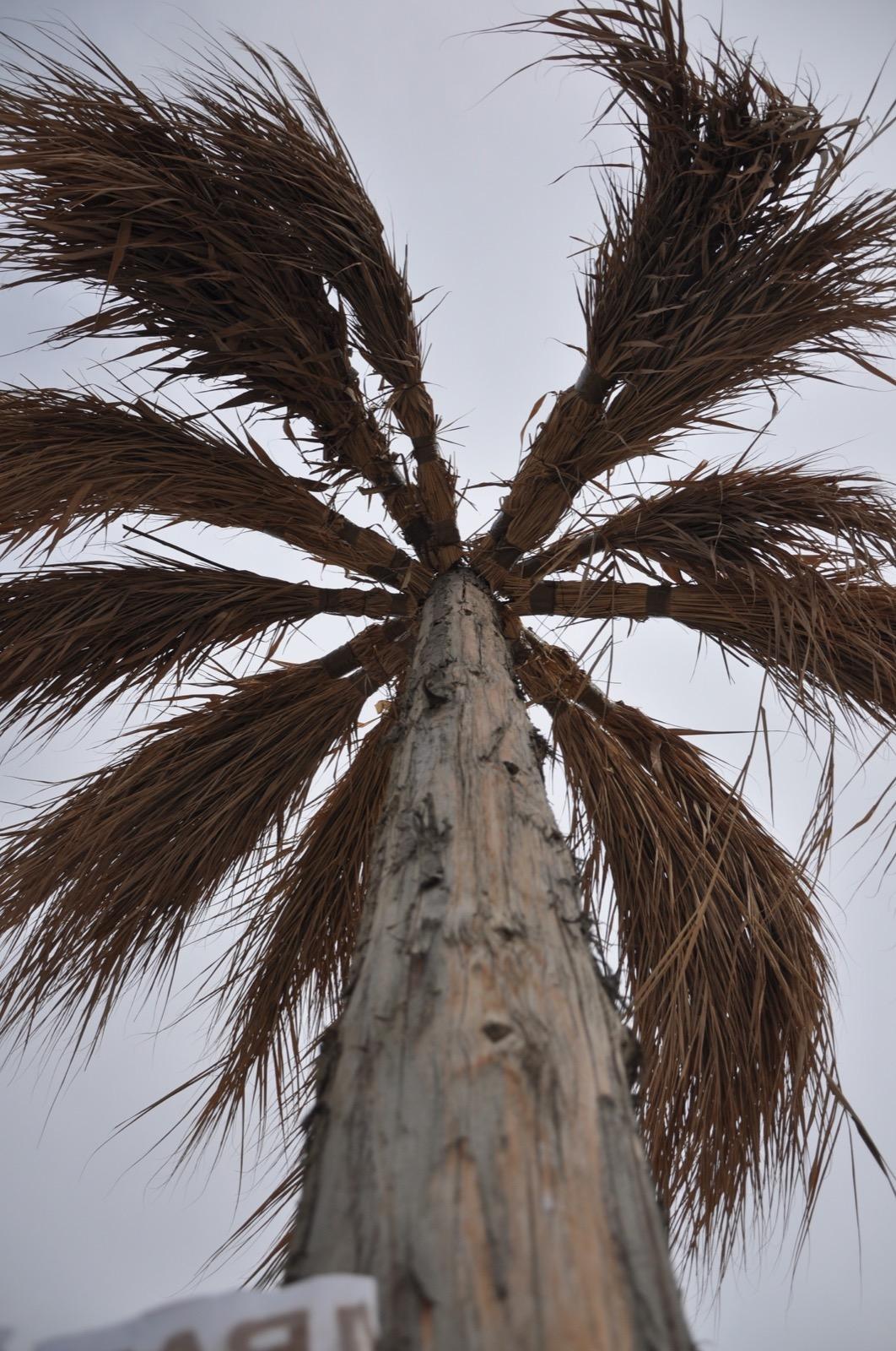 Казантипская пальма