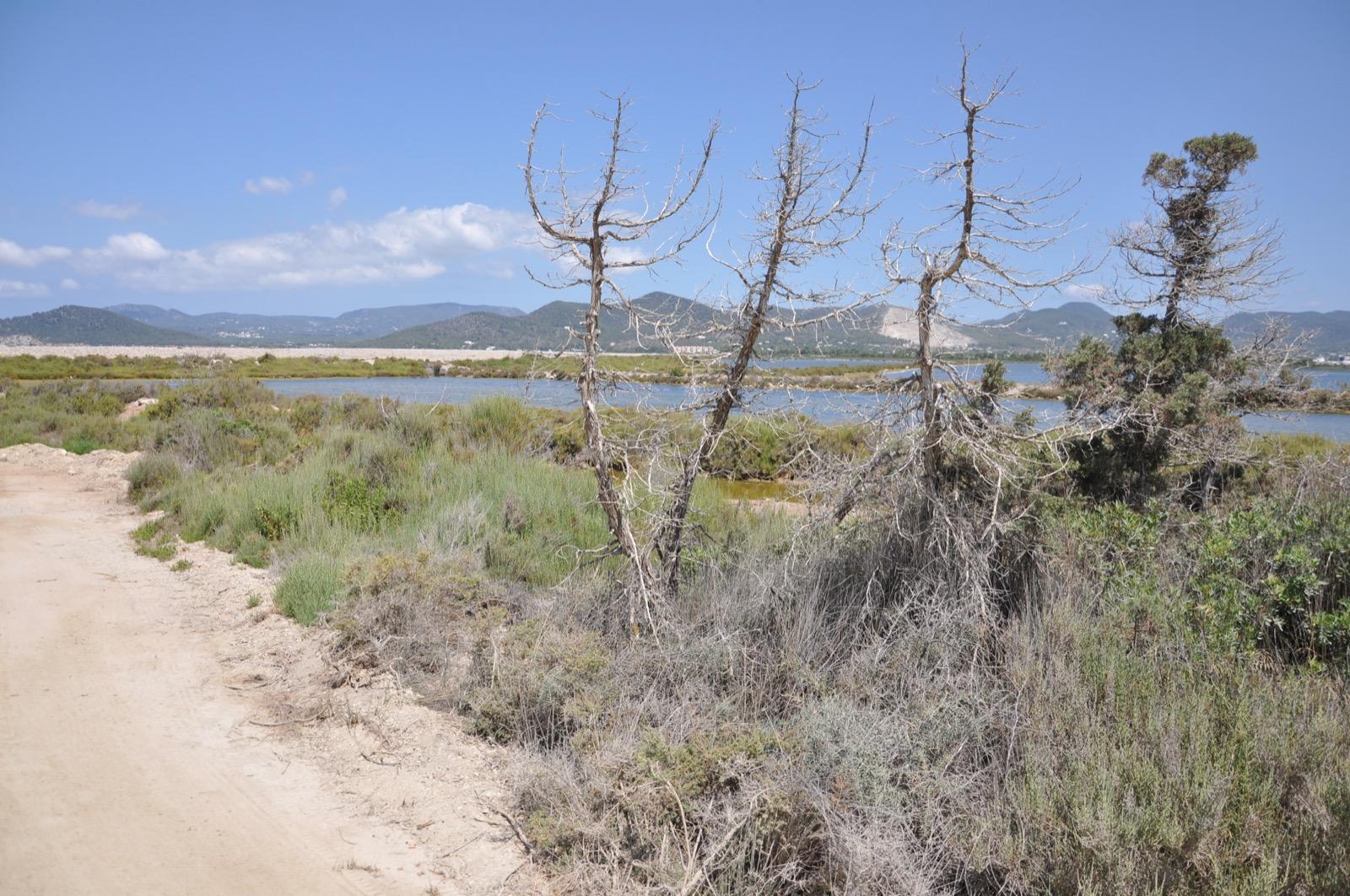 Национальный парк Сес Салинес на Ибице
